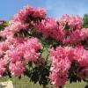 とっとり花回廊④花咲山・バラ園・ヨーロピアンガーデン