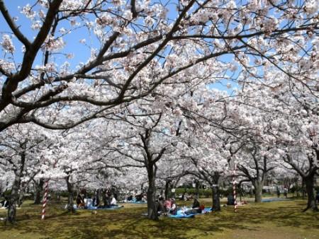 鳥取県の花見・桜の名所一覧 ...