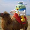 鳥取砂丘でらくだ乗っちゃう?パラグライダー体験しちゃう?