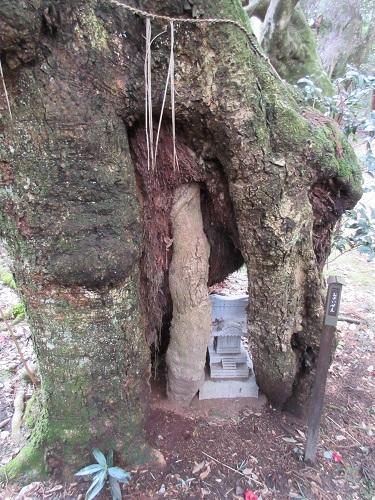 子授・子宝「さんの木」