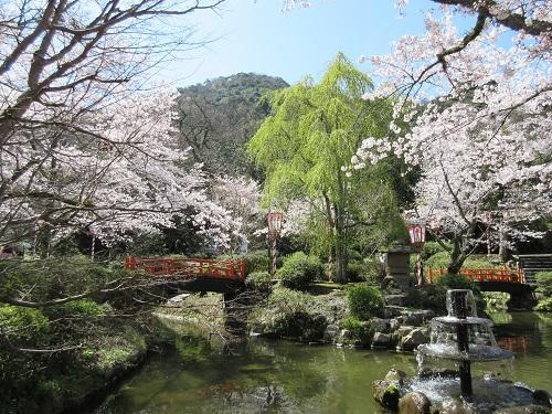 打吹公園の桜満開!花見へ行って...
