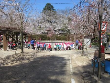 utubukisakura4