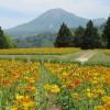 とっとり花回廊⑤「花の丘」