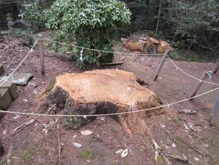 落雷のあった木の切り株