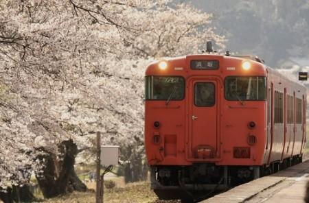 ooiwaekisakura