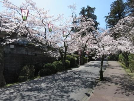utubukisakura2